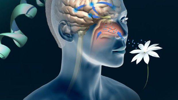 I polipi nasali riducono la quantità di aria respirata e causano infezione delle mucose nasali, con riduzione dell'olfatto.